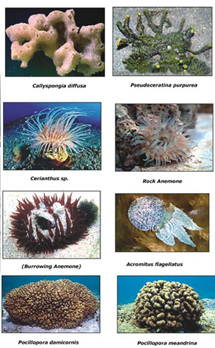 essay on marine biodiversity in india First indian ocean workshop on marine biodiversity: even the 26,000 species catalogued in india function and role of the marine biota of the indian ocean.